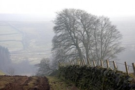 Dallow-Gill-Tree-by-Mike-Bentley