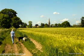 Fields and Church - Bill Tetlow