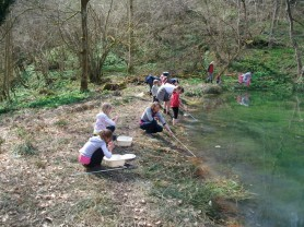 Hackfall Woods - pond Dipping