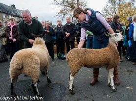 In the Ring at Masham Sheep Fair by Bill Tetlow