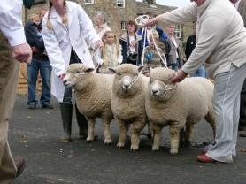 Judging at Masham Sheep Fair