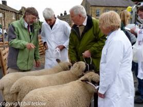 Judging at the Sheep Fair by Bill Tetlow