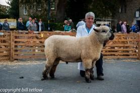 Masham Sheep Fair In The Ring - by Bill Tetlow