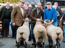 Masham Sheep Fair - by Bill Tetlow