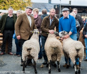 Masham Sheep Fair - by Bill Tetlow