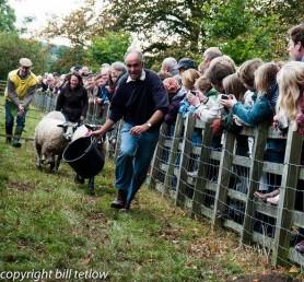Masham Sheep Racing