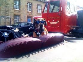 Masham Steam Rally - Doggy Driver