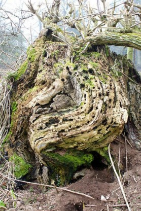Masham Tree by Mike Bentley