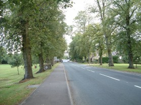 View Up The Avenue