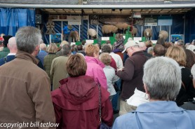 Watching the Sheep Show by Bill Tetlow